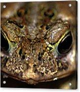 Frog 2 Acrylic Print