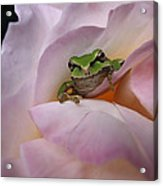 Frog And Rose Photo 1 Acrylic Print