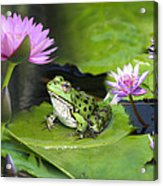 Frog And Water Lilies Acrylic Print