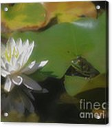 Frog And Water Lily Acrylic Print