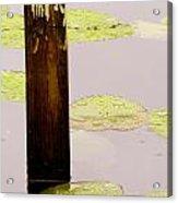 Frog Hunting Acrylic Print