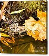 Frog In Water 3 Of 3 Acrylic Print