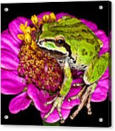 Frog  On Flower Acrylic Print by Jean Noren