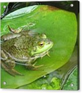 Frog On Lily Pad Photo Acrylic Print