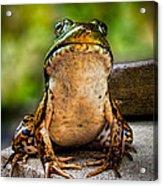 Frog Prince Or So He Thinks Acrylic Print by Bob Orsillo