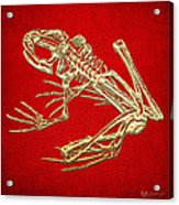 Frog Skeleton In Gold On Red  Acrylic Print