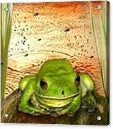 Froggy Heaven Acrylic Print
