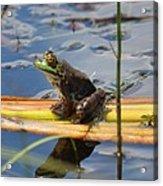 Froggy Reflections Acrylic Print