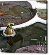 Froggy Throne Acrylic Print