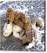 From Bear To Eternity - By William Patrick And Sharon Cummings Acrylic Print