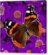 From Hal's Garden 05 Acrylic Print