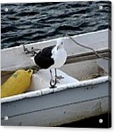 From Rockport Ma A Seagull Chilling Out In A Rowboat Acrylic Print