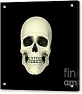 Front View Of Human Skull Acrylic Print by Stocktrek Images