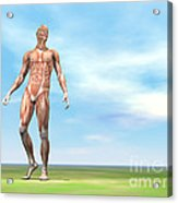 Front View Of Male Musculature Walking Acrylic Print