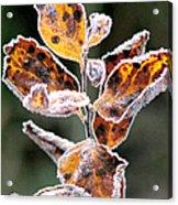 Frost Coated Acrylic Print
