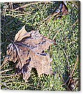 Frost Covered Leaf Acrylic Print