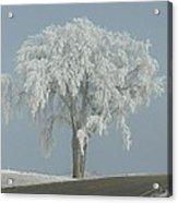 Frost Covered Lone Tree Acrylic Print