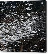Frost Flakes On Ice - 30 Acrylic Print