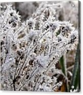 Frost In The Field Acrylic Print