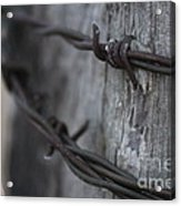 Frost On The Wire Acrylic Print