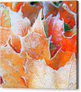 Frost Touched Acrylic Print