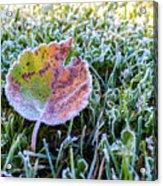Frostbite Acrylic Print