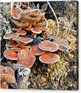 Frosted Cascading Mushrooms Acrylic Print