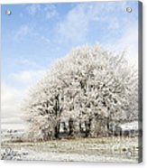 Frosted Copse Acrylic Print by Anne Gilbert
