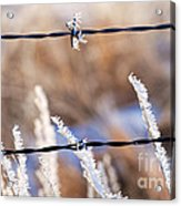 Frosted Fence Line Acrylic Print