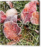 Frosted Leaves Acrylic Print