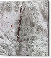 Frosted Pines Acrylic Print