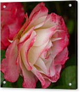Frosted Rose Acrylic Print