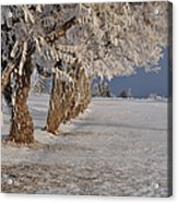 Frosted Trees Acrylic Print