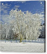 Frosted Trees - Newton Road Park Acrylic Print