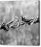 Frosty Barb Wire Acrylic Print