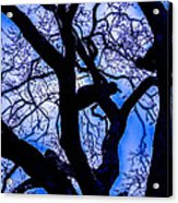 Frosty Blue Abstract Acrylic Print