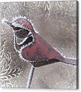Frosty Cardinal Acrylic Print