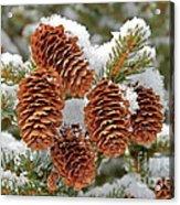 Frosty Cones Acrylic Print
