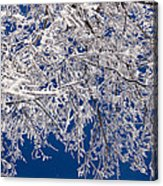 Frosty February Morning Acrylic Print