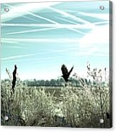 Frosty Flight Acrylic Print