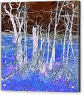 Frosty Forest Acrylic Print