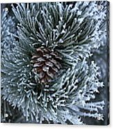 Frosty Fort Collins Morning Acrylic Print by Michael Gourley