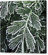 Frosty Leaves Macro Acrylic Print