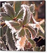 Frosty Morning Acrylic Print by Dave Woodbridge