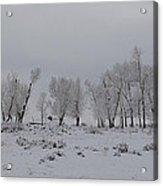Frosty Morning Tree Line Acrylic Print