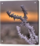 Frosty The Twig  Acrylic Print