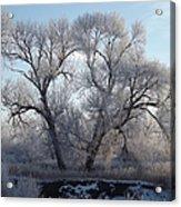 Frosty Trees 4 Acrylic Print