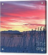 Frosty Winter Sunrise Acrylic Print