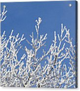 Frosty Winter Wonderland 01 Acrylic Print