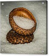 Frozen Acorn Cupule Acrylic Print